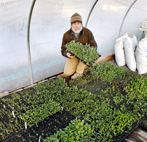 Bruce with loads of baby greens